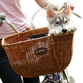 Pet Cruiser Wicker Cruiser Pet Bicycle Basket